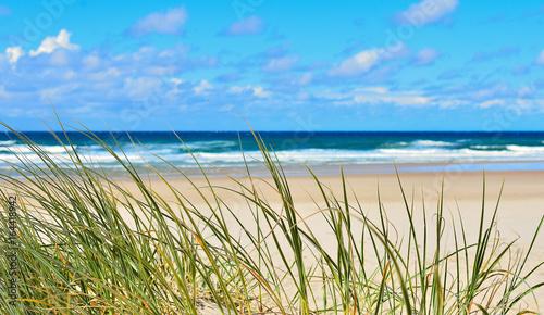 herbes poussant sur les dunes d'une plage landaise