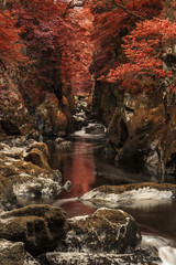 Obraz na PlexiStunning ethereal landscape of deep sided gorge with rock walls and stream flowing through surreal deep red foliage