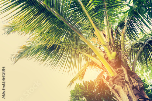 Foto-Schiebegardine Komplettsystem - vintage coconut tree on day time.