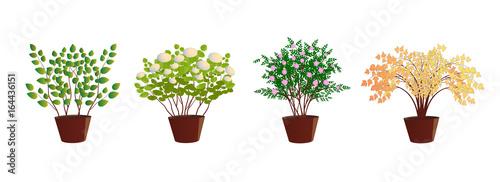 Billede på lærred Saplings of ornamental shrubs in pots, in a container