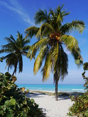 Fototapeta Optyczne powiększenie Palmier plage