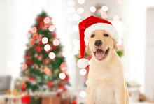 Cute Puppy In Santa Hat And Bl...