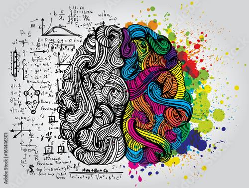 Fototapeta Left and right human brain. Creative half and logic half of human mind. Vector illustration. obraz na płótnie