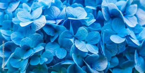 Fototapeta  Fundo azul com flores.