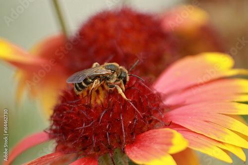 Aluminium Prints Bee Bee on flower