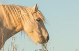 Poney Highland - 164463361
