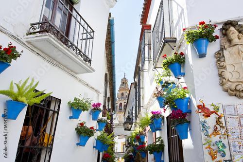 Fotografia Flowers in flowerpot on the white walls on famous Flower street Calleja de las F