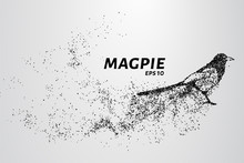 Magpie Of Particles. The Magpie Consists Of Circles And Points. Vector Illustration.