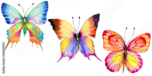 Fotografía  Exotic butterfly wild insect in a watercolor style isolated