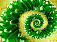 Yellow Green Flower Spiral Abs...