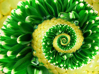 yellow green flower spiral abstract fractal effect pattern background. Floral spiral abstract pattern fractal. Incredible green flowers pattern round circle spirally incredible background