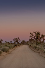 Dirt Road Through Joshua Tree ...