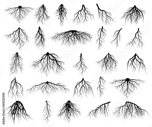 Set of tree roots Wall mural