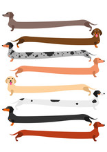 Very Long Colorful Dachshund Set