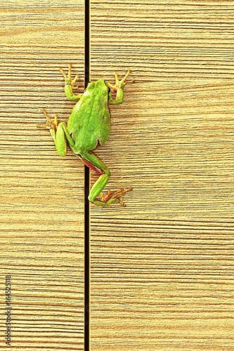 tree frog climbing on furniture Canvas Print