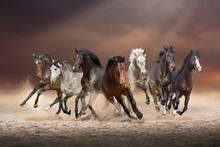 Herd Of Horses Run Forward On ...