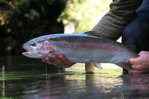 Stampa su Tela fly fishing new zealand river scene scenery trout
