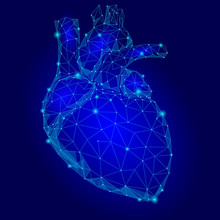 Human Heart Internal Organ Tri...