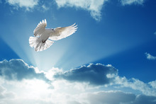 Holy Spirit Dove Flies In Blue...
