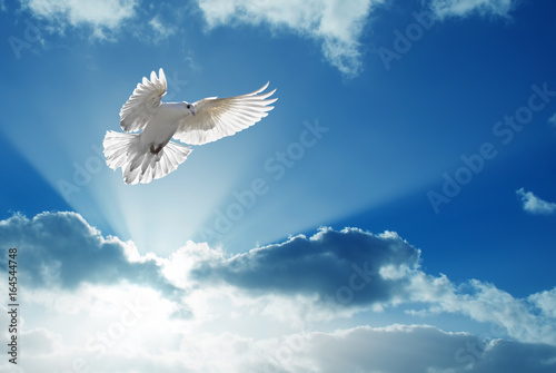 Fotografia Holy Spirit dove flies in blue sky