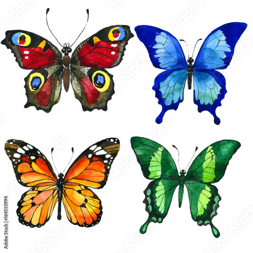 Fotografie, Tablou  Exotic butterfly wild insect in a watercolor style isolated