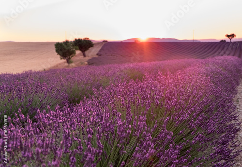 Fotobehang Crimson Beautiful lavender fields at sunset time. Valensole. Provence, France