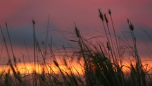 Reeds Blow Softly In The Wind ...