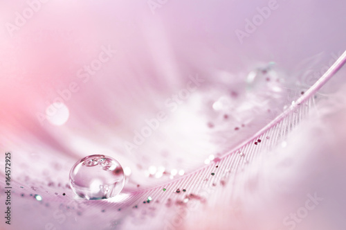 Feather pink bird with sparkles and transparent drop of dew water sparkles in the rays of bright light close-up macro. Glamorous sophisticated airy artistic image on a soft blurred background.