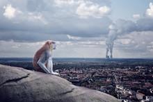 Einsame Affe Sitzt über Die Stadt