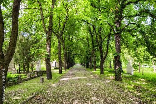 Foto op Canvas Begraafplaats Kerepesi - historic cemetery in Budapest, Hungary
