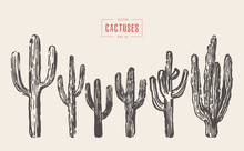 Set Of Cactuses Hand Drawn Vec...