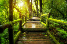 Green Moss And Wooden Bridge At Angka Nature Trail In Doi Inthanon National Park, Thailand