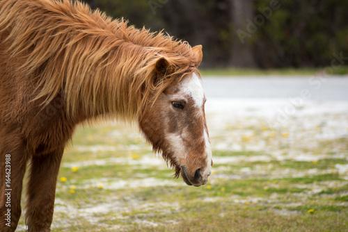 Photo  Wild Pony