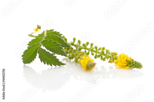 Photo Common agrimony isolated on white.