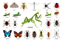 Large Set Of Different Insects