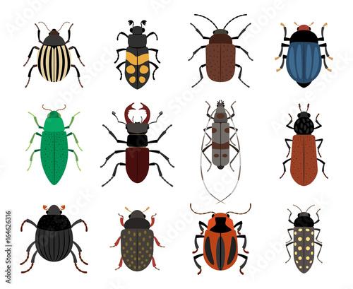 Obraz na płótnie Collection of cute beetles