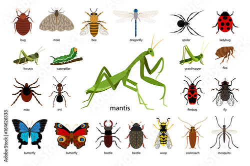 Carta da parati Large set of different insects