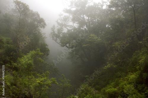 Foto auf Acrylglas Wald im Nebel Floresta envolta em nevoeiro, mistério e silêncio