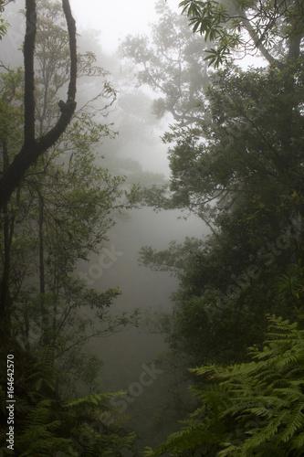 Fotografie, Obraz  Floresta envolta em nevoeiro, mistério e silêncio.