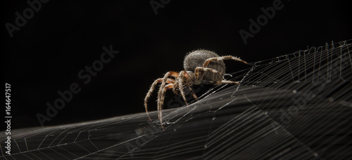 Papel de parede Spider on web