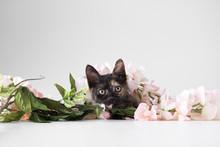 Kitten Hiding Under Faux Flowers