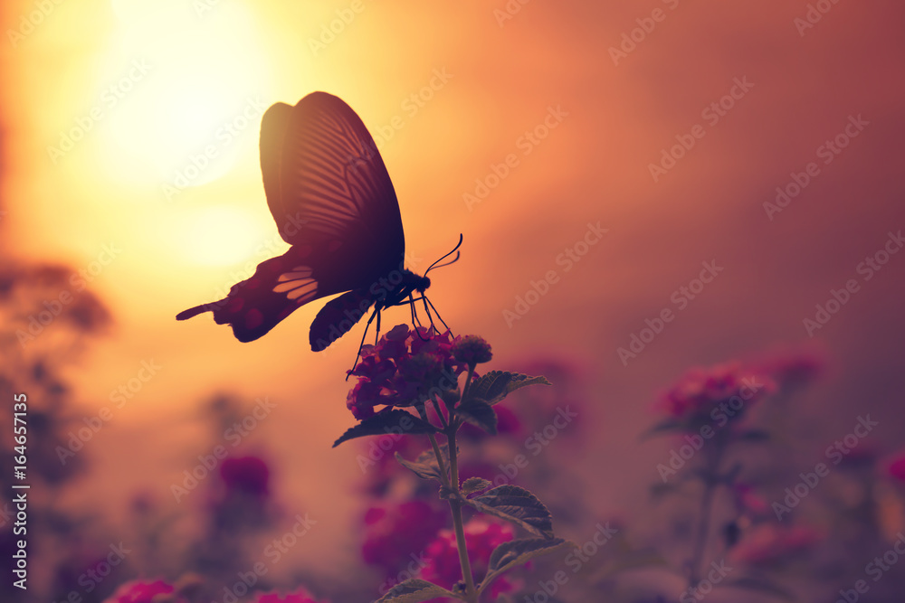 Shadow of butterfly on flowers with sunlight reflection from water in background.