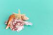 seashells on a bright background