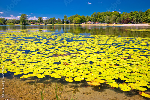 Aluminium Prints Yellow Soderica lake green landscape and water lilys view