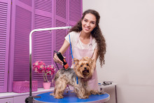 Professional Young Groomer Tri...
