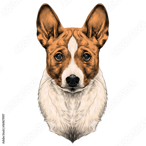 Foto  the dog breed Basenji head sketch vector graphics color picture