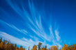 canvas print picture - Cirrus clouds in Park