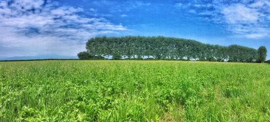 pascolo nelle campagne piemontesi