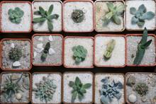 Rare Succulent Plants