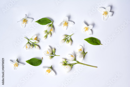 Set of jasmine flowers on white background Poster Mural XXL